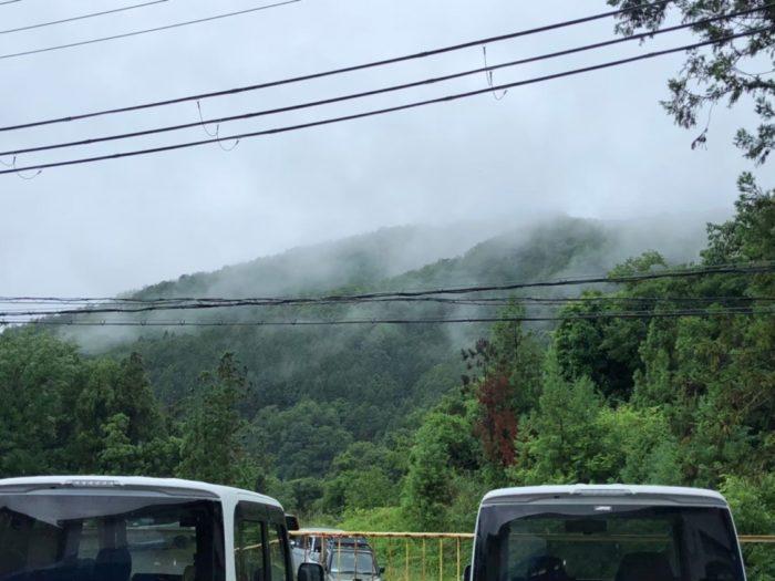 雨のネスト 霧がかかってる